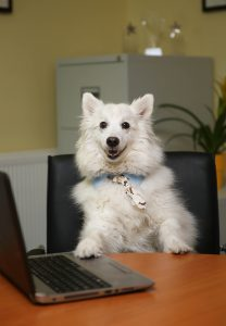 "Dogs Trust Calling On Workplaces To Take Part In ""Bring Your Dog To Work Day"""