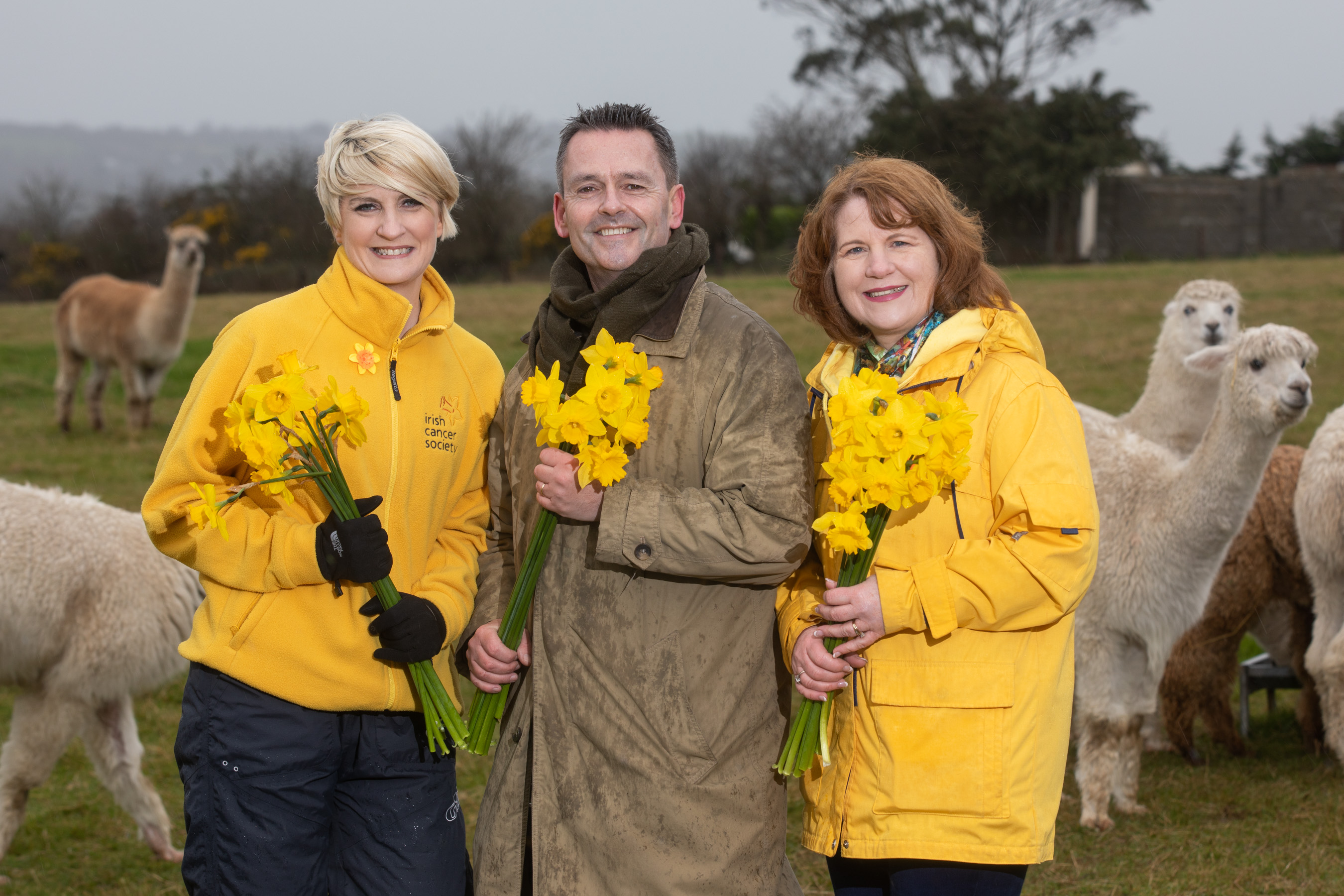 Aengus MacGrianna calls on businesses in Offaly to help 'alpaca' punch to cancer on Daffodil Day