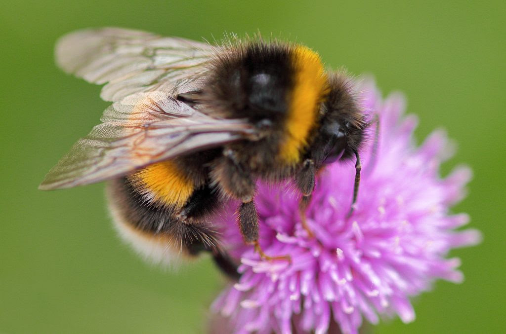 National Biodiversity Week 2020 in Ireland runs from 18th to 22nd May